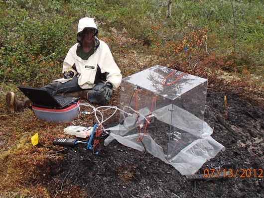 Dr. Sue Natali (University of Florida) uses the flux chamber at a burn plot.