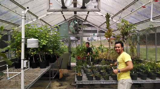 At the Botanic Garden of the University of Puerto Rico. Growing endemic plants in a greenhouse for a Wetland Restoration Project at Cataño, PR.