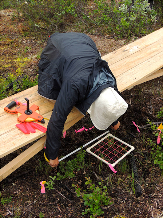 Erika using the point-frame to find biomass.