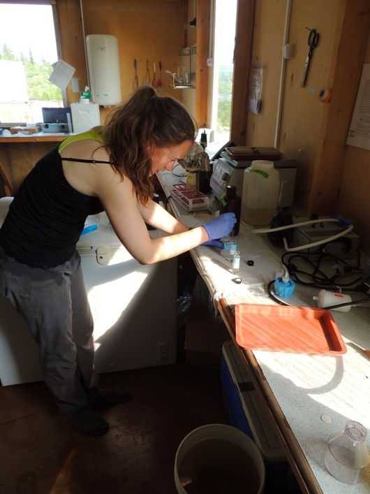 Megan adds acid to her samples to stop microbial action.